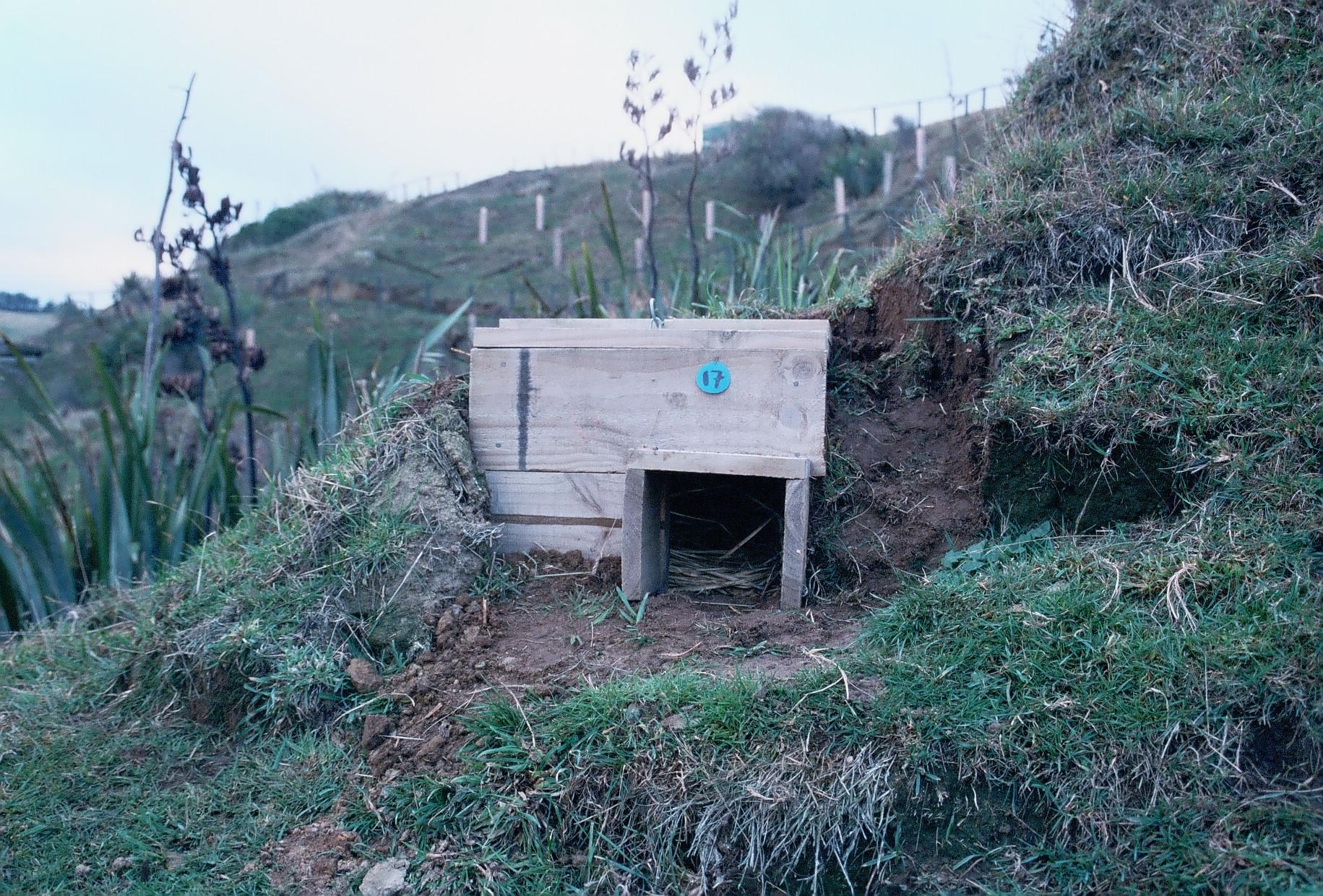 Penguin bungalow